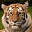 Sanjay Jayani's profile photo
