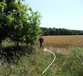10k 2.5km, Keep Left around Wood