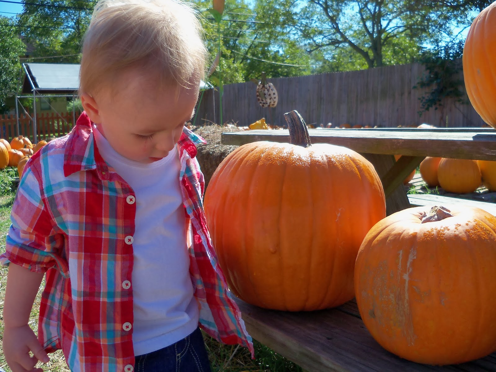 Pumpkin Patch - 115_8230.JPG