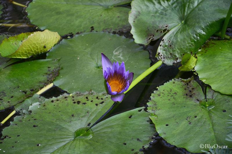 Orto Botanico Padova 11 06 2016 N 7a