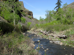 Umtanum Creek canyon