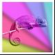 Chameleon Color Adapting LWP v1.1