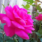 Gardening 2013 - 115_5392.JPG
