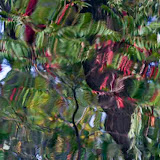 reflections_MG_9617-copy.jpg