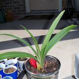 Gardening 2010 - 101_1350.JPG
