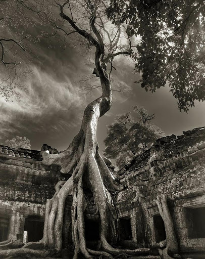 Tahun Mengambil Foto Pohon Tertua di Dunia Seorang Wanita yang Menghabiskan waktu 14 Tahun Mengambil Foto Pohon Tertua di Dunia