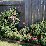 Gardening 2011 - 100_9012.JPG