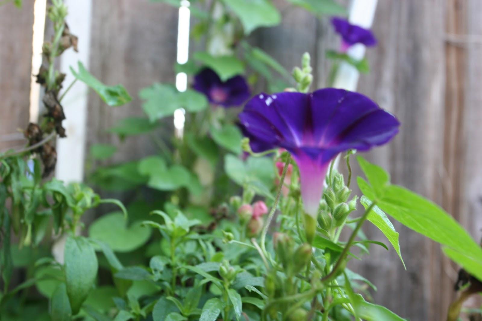 Gardening 2012 - IMG_3139.JPG