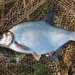 20140624_Fishing_BasivKut_020.jpg