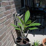 Gardening 2010, Part Three - 101_4469.JPG