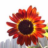 Gardening 2009 - 101_4874.JPG