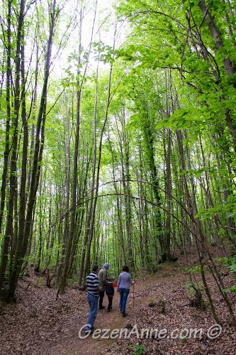 ormanın derinliklerine doğru yürürken, Polonezköy Tabiat Parkı