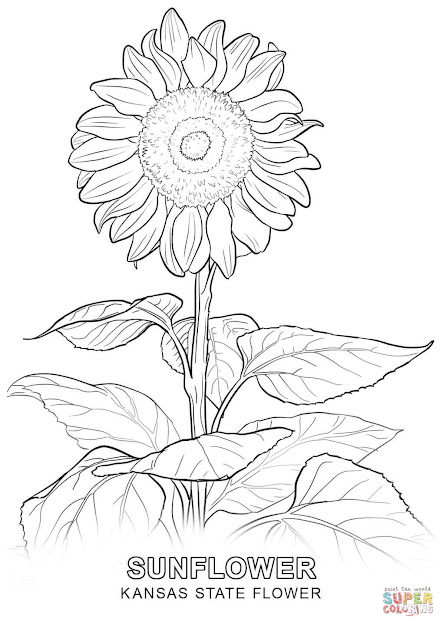Click The Kansas State Flower Coloring Pages To View Printable Version Or  Color It Online Patible With Ipad And Android Tablets