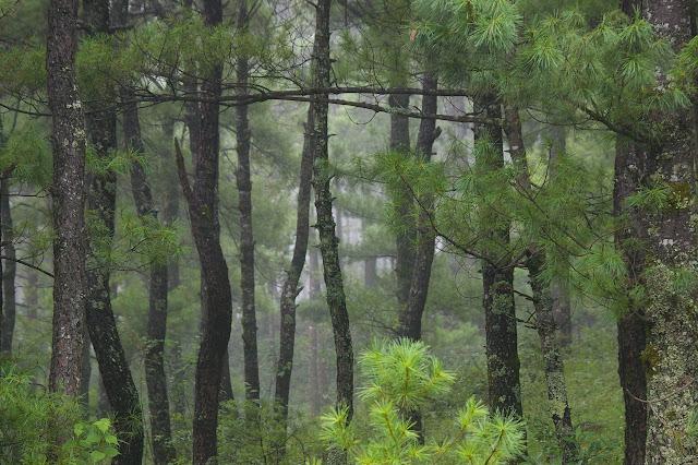La forêt au-dessus de Yulong (2700 m), 21 août 2010. Photo : J.-M. Gayman