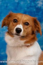 Huisdierreportage Hondendag Uden Dierendag (4 oktober 2008) - 09