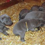 Bluebelle & Cobys 4/19/10 litter - IMG_0768.JPG