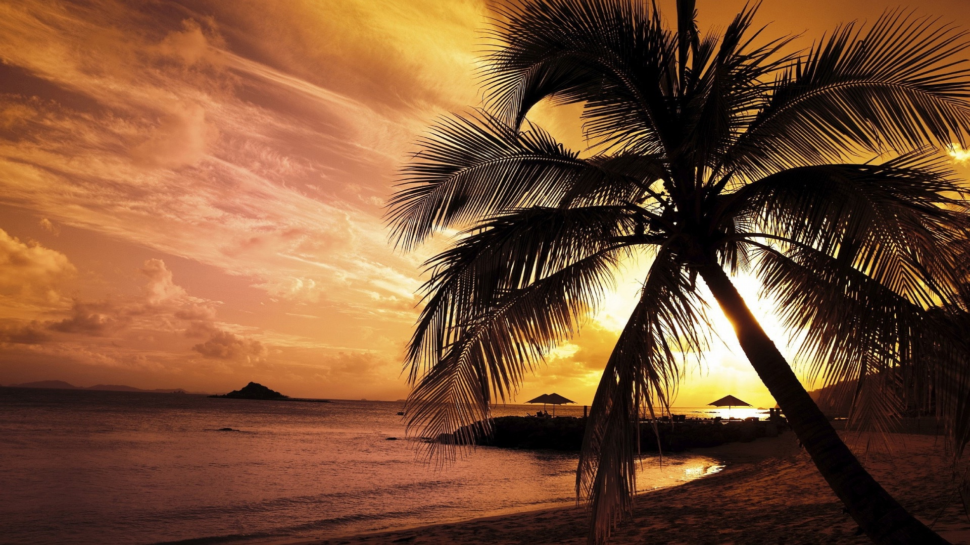 Sunset Beach Palm Mystery Wallpaper