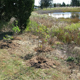 Hammo Planting - Shannon Schiesser - IMG_4959.JPG