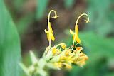 flower (84).jpg