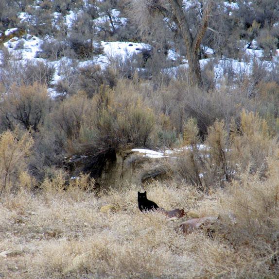 Unusual wildlife in Nine Mile Canyon