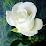 กมลพัฒน์ เปี่ยมสนธ์ (จ๊ะเอ๋)'s profile photo