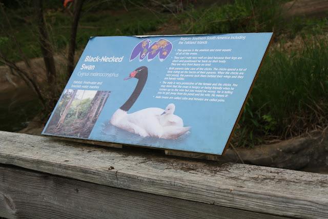 Zoo Snooze 2015 - IMG_7325.JPG