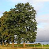 Fotowedstrijd Erfgoedbomen - 2012