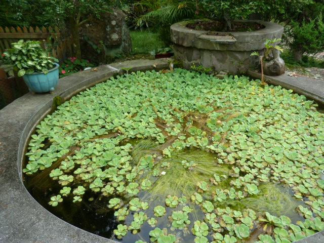 TAIWAN.Dans la région de Miaoli - P1080491.JPG