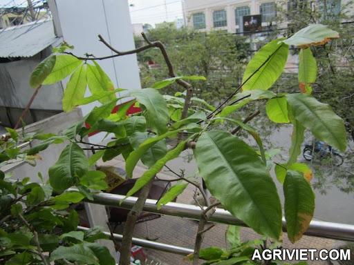 Agriviet.Com-IMG_0004.JPG