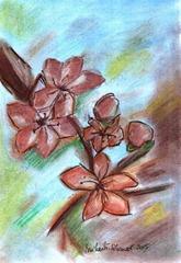 472 Sakura Flowers