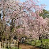2014 Japan - Dag 10 - marjolein-IMG_1412-0176.JPG