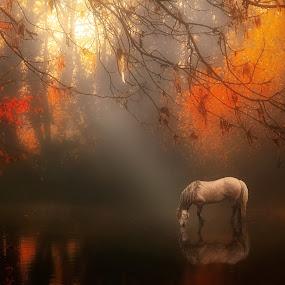 Autumn Mist by Jennifer Woodward - Digital Art Places ( mammals, orange, animals, nature, autumn, horse, landscape )