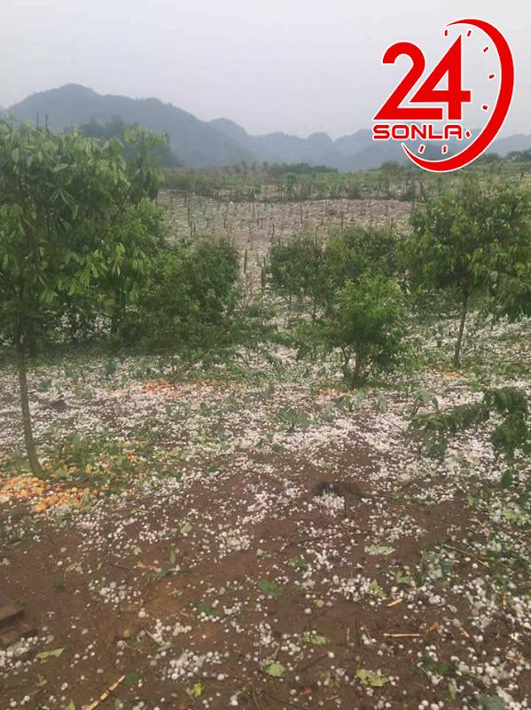 Mưa đá tại Vân Hồ, Mộc Châu - Sơn La.
