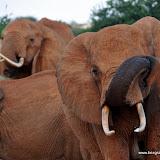 Tsavo East - Kenia