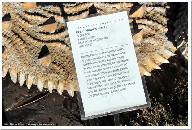 151230_Tucson_Tohono-Chul-Park_0029