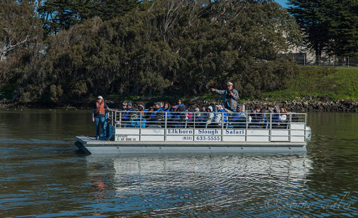 Taking the Elkhorn Slough Safari - Sea Otters, Sea Lions, and California Seals, Oh My!