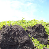Hawaii Day 5 - 100_7506.JPG