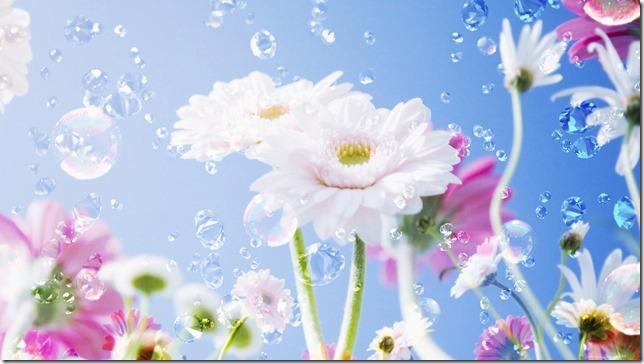 margaritas flores (42)