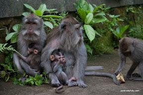 Monkey Forrest, Ubud