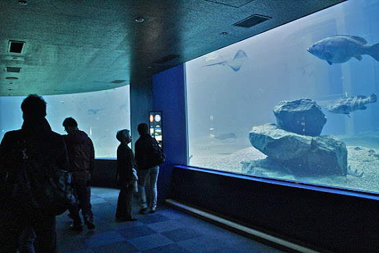 top attractions in osaka, things to do and see in osaka, osaka aquarium, deep sea fish,