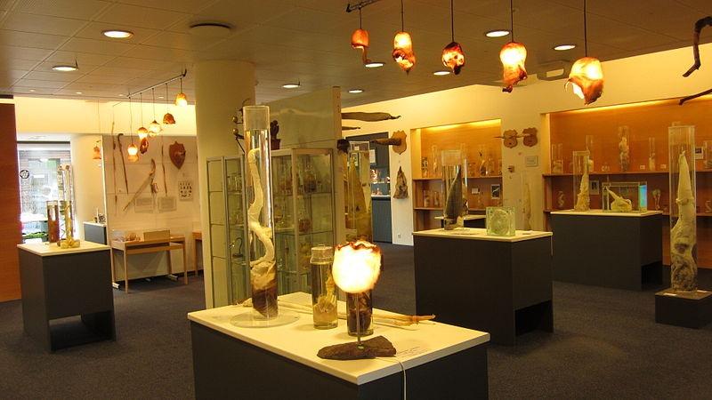 icelandic-phallological-museum-16