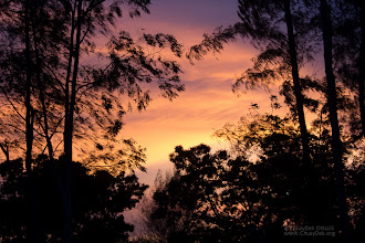 Photo: An amazing sunset behind the coastal forest, the first ever for all the kids of the Study Tour, a special one even for us.  ท้องฟ้าเย็นนี้สวยมาก