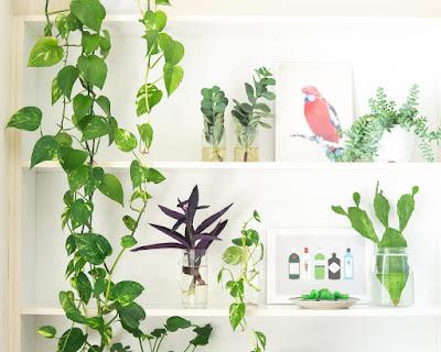 Planta jiboia em ambiente interno