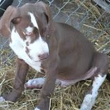 Jasper- born on 4/2/2010 - IMG_1459.JPG