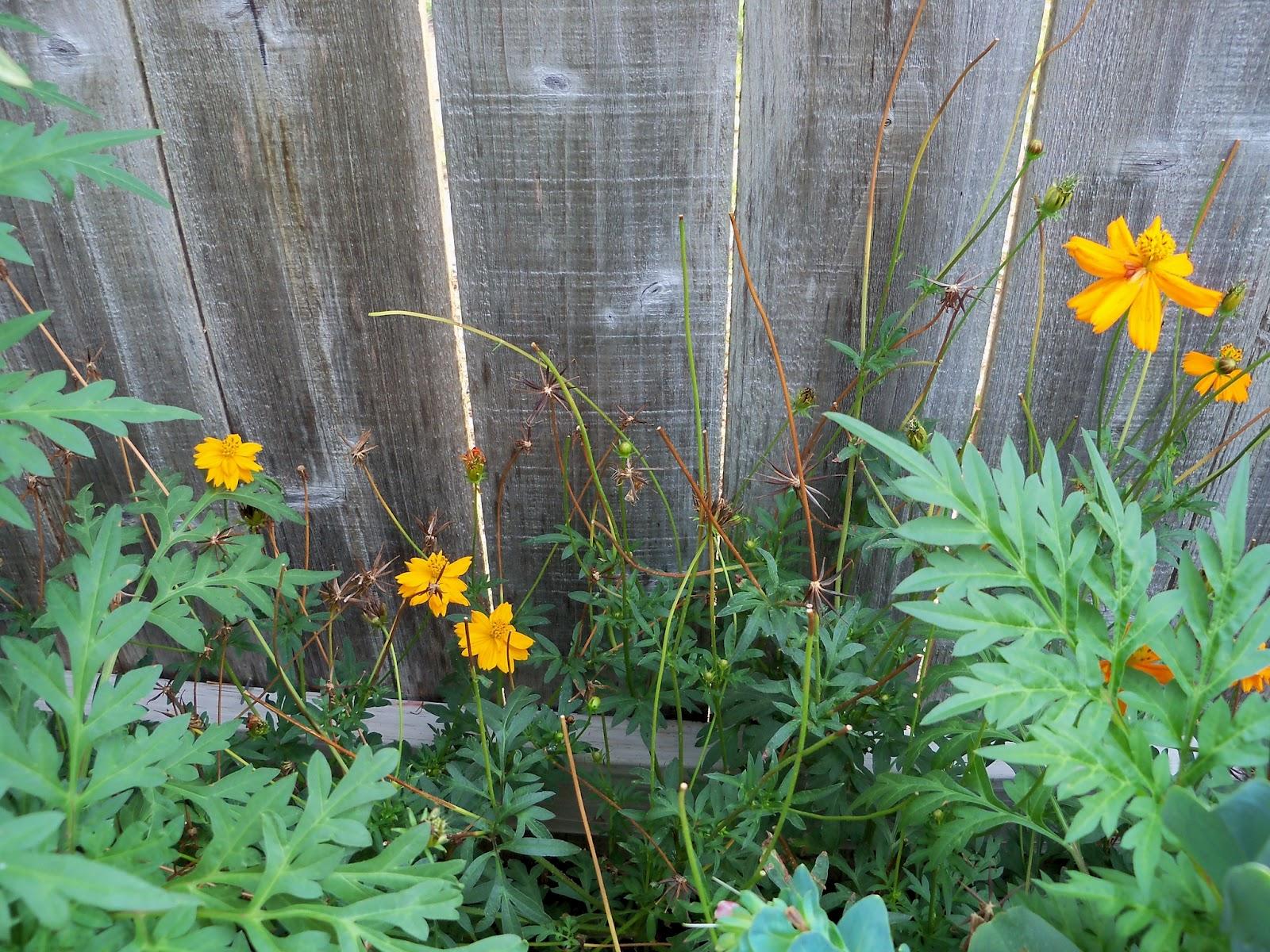 Gardening 2011 - 100_9349.JPG