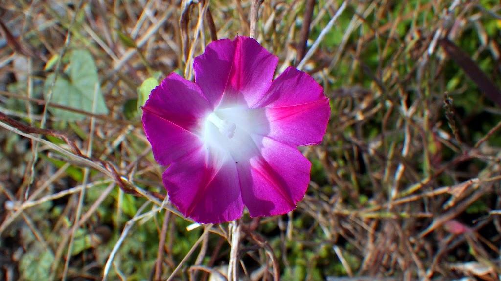 花の写真、赤系