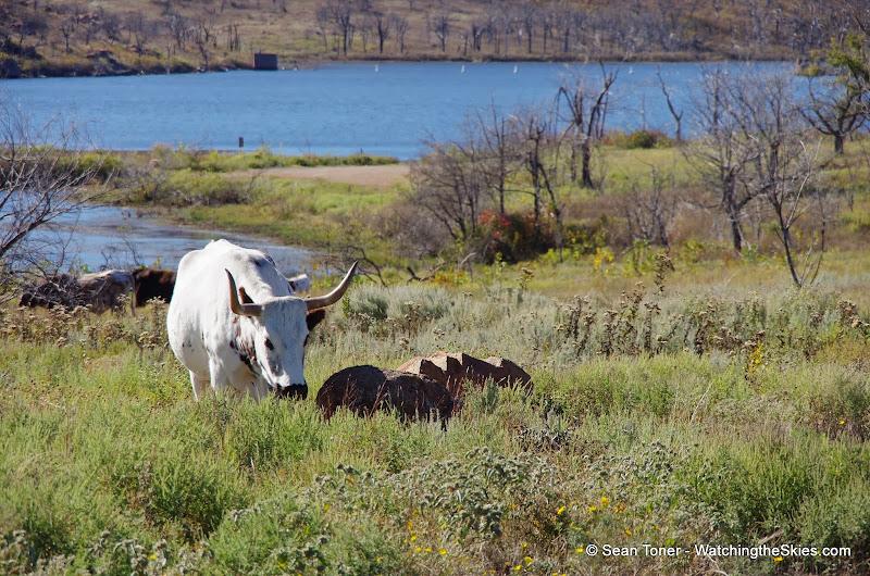 11-09-13 Wichita Mountains Wildlife Refuge - IMGP0407.JPG