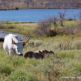 11-09-13 Wichita Mountains Wildlife Refuge - IMGP0407.JPG