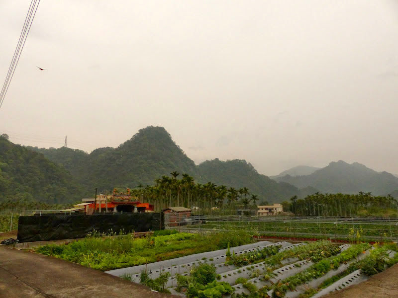 Miaoli county. Nanzhang puis Dahu la capitale de la fraise... - P1050231.JPG