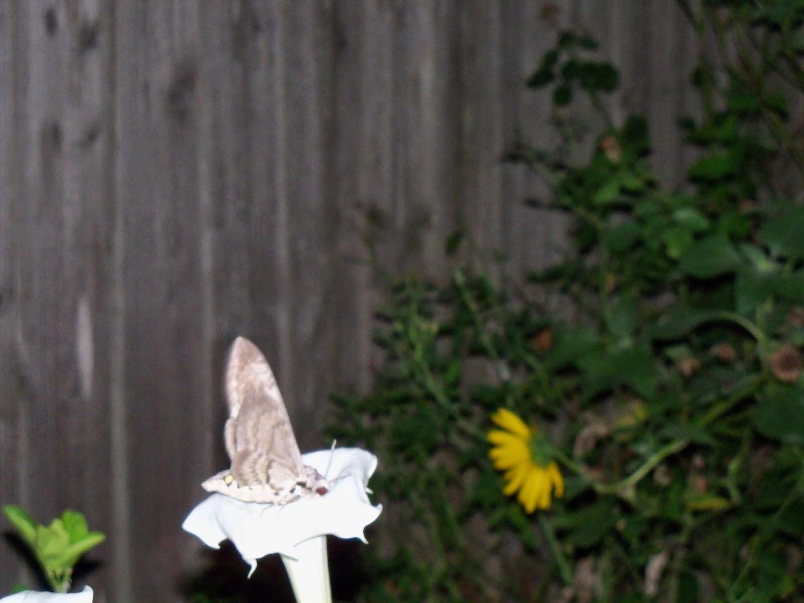 Gardening 2014 - 116_3598.JPG